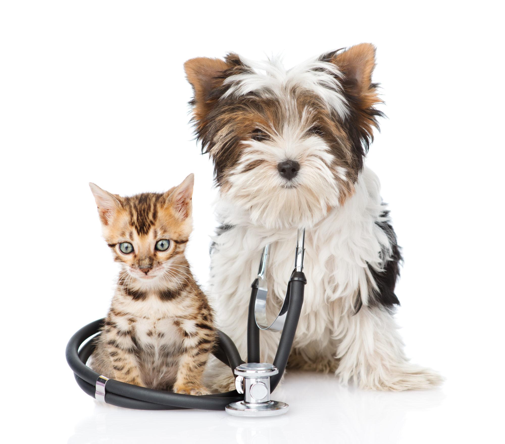 Clinique vétérinaire des Patriotes